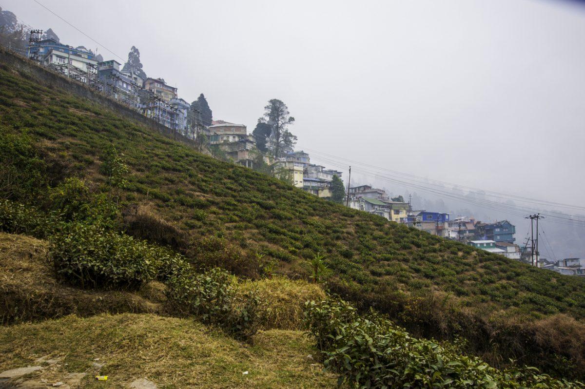 Darjeeling-005