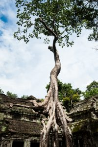Web Angkor (36 sur 45)
