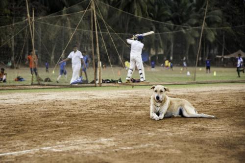Coup de batte à Mumbai : le cricket en Inde. 2016.
